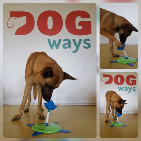 Ghost & Kaya met de Tulip - Dog Ways Webshop