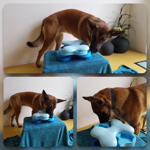Kaya met de Dog Tornado - Dog Ways Webshop